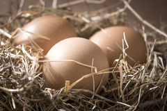 Organic brown eggs in a nest of hay. Three fresh brown chicken eggs lie in a nest of hay on a brown background Stock Images