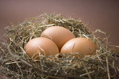 Organic brown eggs in a nest of hay. Three fresh brown chicken eggs lie in a nest of hay on a brown background Stock Photos