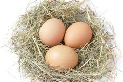 Organic brown eggs in a nest of hay on white background. Three fresh brown chicken eggs lie in a nest of hay on white background Royalty Free Stock Photos