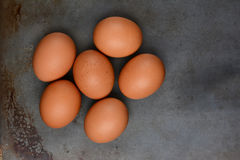 Organic Brown Eggs Stock Photography