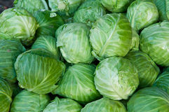 Organic Cabbage Royalty Free Stock Photo