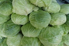 Organic cabbage arranged Royalty Free Stock Photography