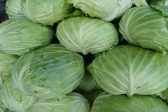Organic cabbage arranged Stock Photography