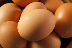 Organic Cage Free Brown Eggs stock photos