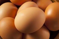 Organic Cage Free Brown Eggs Stock Photos