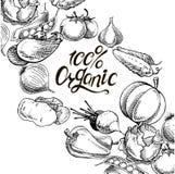 100 organic calligraphy inscription with hand drawn vegetables. Organic natural fresh vegetables set. cucumber, pumpkin, onion, garlic, carrot, potato,eggplant Stock Photos