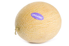 Organic Cantaloupe Isolated on White Royalty Free Stock Photo