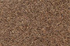 Organic Caraway. Royalty Free Stock Photo