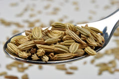 Organic caraway seed on a spoon Royalty Free Stock Photography