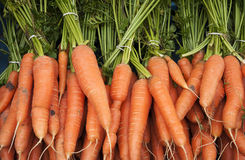 Organic carrot. Bunches of fresh organic carrot Royalty Free Stock Images