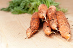 Organic carrot bunch Royalty Free Stock Photo