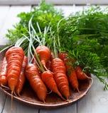 Organic carrot Royalty Free Stock Photos