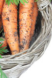 Organic carrots. Freshly harvested organic carrots in basket, isolated on white Royalty Free Stock Photo