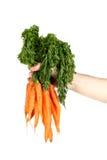 Organic carrots Stock Photography