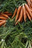 Organic Carrots  Stock Photos