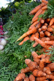 Organic Carrots. Bunches of organic carrots at the framers market Stock Photo