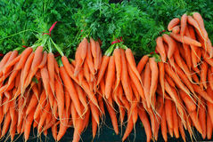 Organic Carrots. Bunch of Organic Carrots at the farmers market Royalty Free Stock Images