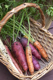 Organic carrots in a basket. Stock Photo