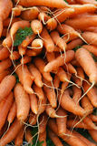Organic carrots Royalty Free Stock Image
