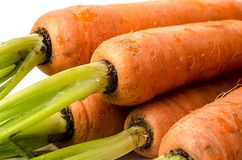 Organic Carrots Royalty Free Stock Photos