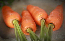 Organic carrots. Closeup of some fresh and organic carrots Stock Image