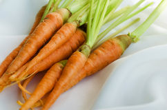 Organic Carrots for Cooking. Fresh organic carrots for cooking and clean eating Royalty Free Stock Photography