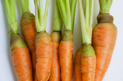 Organic Carrots for Cooking. Fresh organic carrots for cooking and clean eating Stock Images