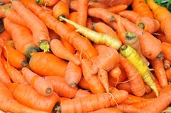 Organic carrots in a market on sale in Italy Stock Photography