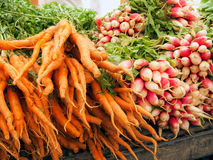 Organic Carrots and Radishes Royalty Free Stock Images