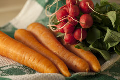 Organic carrots and radishes. Fresh organic carrots and radishes Stock Photography