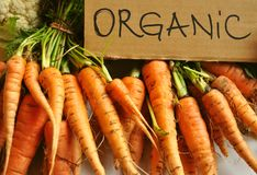 Organic , real vegetables : carrots royalty free stock images
