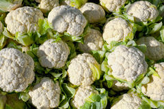 Organic cauliflower. Fresh raw cauliflower. Concept for healty organic vegetarian food Stock Photography