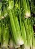 Organic Celery  Stock Image