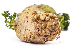 Organic celery roots. Two fresh organic celery roots with leaves on a white background Stock Images