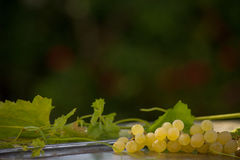 Organic Chenin Blanc Wine Grapes in California 6 Stock Images