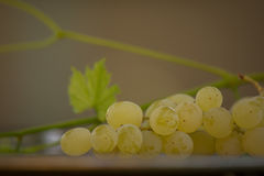 Organic Chenin Blanc Wine Grapes in California 3 Stock Images