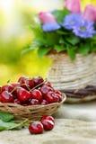 Organic cherries Royalty Free Stock Photos