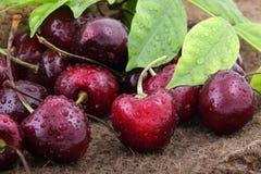 Organic cherries with leaves Stock Photo