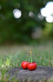Organic Cherries on wood Stock Photo
