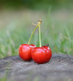Organic Cherries on wood Stock Photography