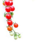organic cherry tomatoes, isolated on white background Stock Images