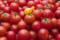 Organic Cherry tomatoes at the market freshly picked from the garden Stock Photography