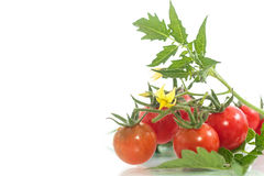 Organic cherry tomatoes Stock Photo