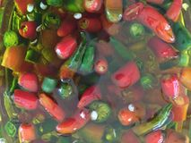 Spicy Chillies in Olive Oil. Organic green and red spicy chillies marinated in oiive oil Royalty Free Stock Photos