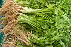 Organic Cilantro. For sale at a Farmer's Market stock photo
