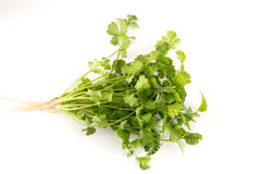 Organic cilantro. Fresh a stack of organic cilantro background royalty free stock photography