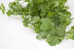 Organic cilantro Royalty Free Stock Photos