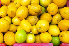 Organic citrons from Portugal Royalty Free Stock Photo