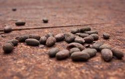 Organic Cocoa beans in little cocoa farm in Costarica jungle. Farming in tropics, pura vida costa rica, dried cocoa beans, healthy lifestyle, health from stock image