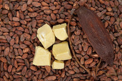 Organic cocoa butter Stock Images
